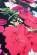 Lehke letni pouzdrove saty nad kolena, elasticky material, cerna + potisk kvetu S-305-BK (6)